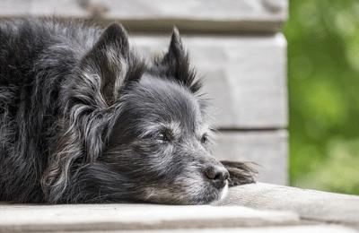 autoimmunerkrankung polyarthritis hund behandlung)